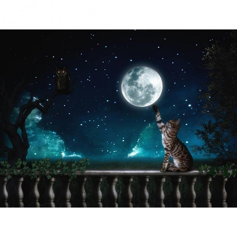 Cat Touch Moon - Ful...